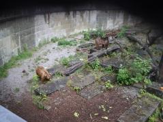 Βέρνη πάρκο με Αρκούδες